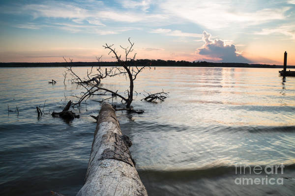 Wall Art - Photograph - A Fallen Tree And The Evening Sky by Ellie Teramoto