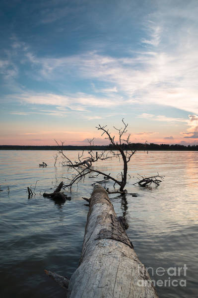 Wall Art - Photograph - A Fallen Tree In The Dusk by Ellie Teramoto