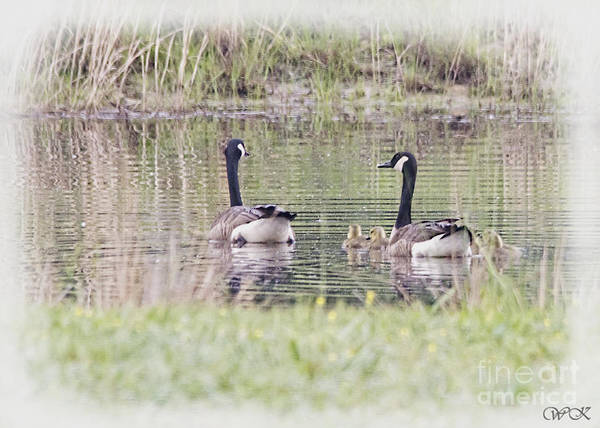 Photograph - A Family by Wanda Krack