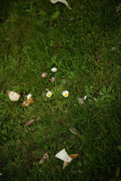 Hessen Photograph - A Few Daisies On A Meadow. Rhoen by Sebastian Kujas