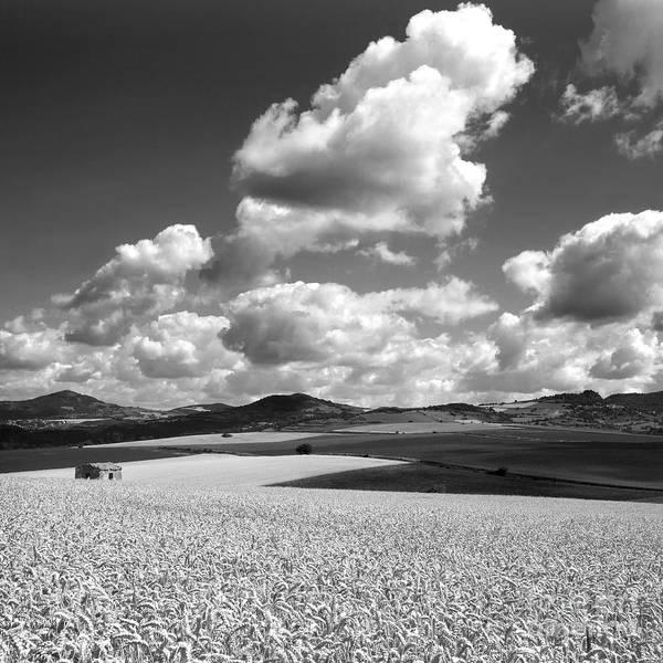 Cornfield Photograph - A Field Of Wheat. Limagne. Auvergne. France by Bernard Jaubert