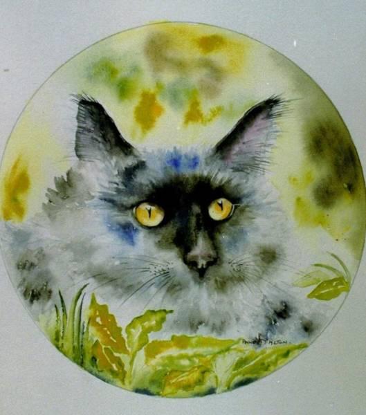 Drawing - A Fine Cat by Anne Dalton