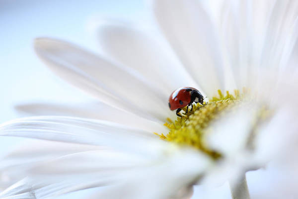 Ladybird Wall Art - Photograph - A Fine Lady by Aaron Aldrich