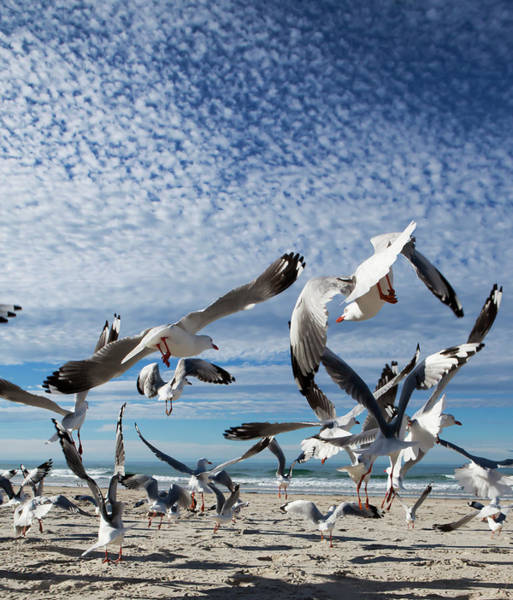 Taking Off Photograph - A Flock Of Birds Taking Flight From A by Marcos Welsh / Design Pics