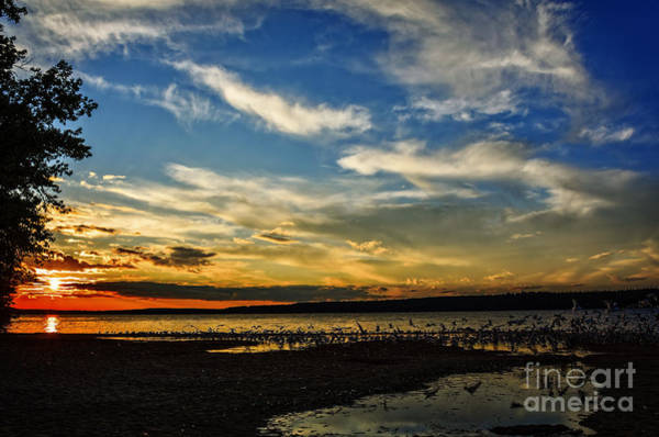 Waskesiu Photograph - A Flock Of Seagulls At Sunset by Viktor Birkus