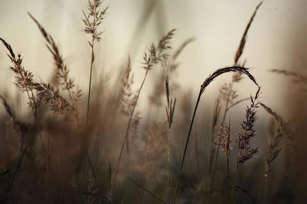 Tallgrass Wall Art - Photograph - A Foggy Autumn Morning On The Kansas by Jim Richardson