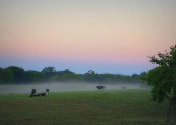 Photograph - A Foggy Morning by Cricket Hackmann