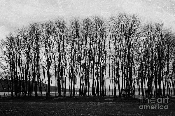 Wall Art - Photograph - A Forest Of Trees by Sylvia Cook