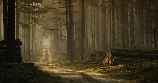 Timbers Photograph - A Forest Walk by Jan Paul Kraaij