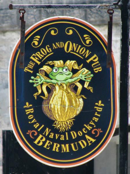 Bermuda Onion Wall Art - Photograph - A Frog And An Onion by Lin Grosvenor