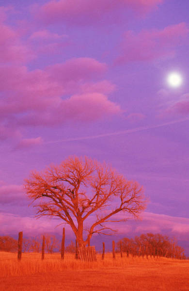 Wall Art - Photograph - A Full Moon At Sunset Glistens by Beth Wald