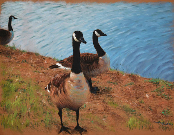 Painting - A Gaggle Of Ganders by Christopher Reid
