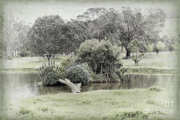 Photograph - A Garden In Capel by Elaine Teague