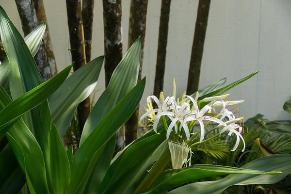 Bamboo Shoots Photograph - A Garden Like An Ikebana Flower Arrangement by Georgia Mizuleva
