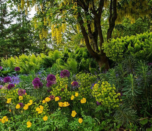 Photograph - A Garden Of Color - Nature Art by Jordan Blackstone