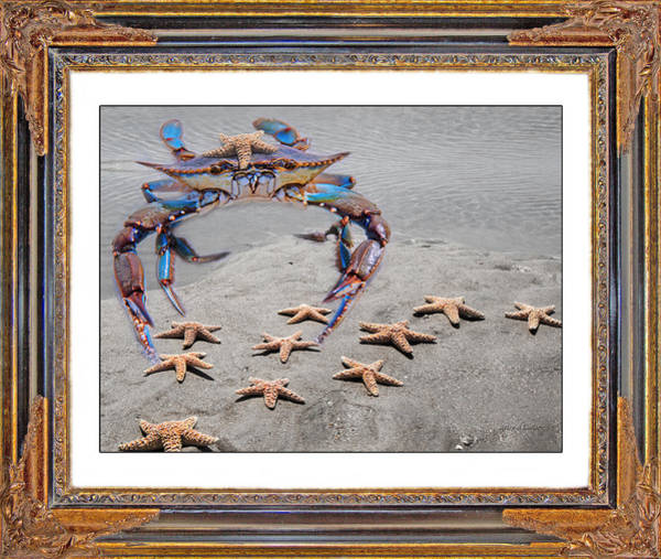 Framing Photograph - A Gathering Of Stars by Betsy Knapp