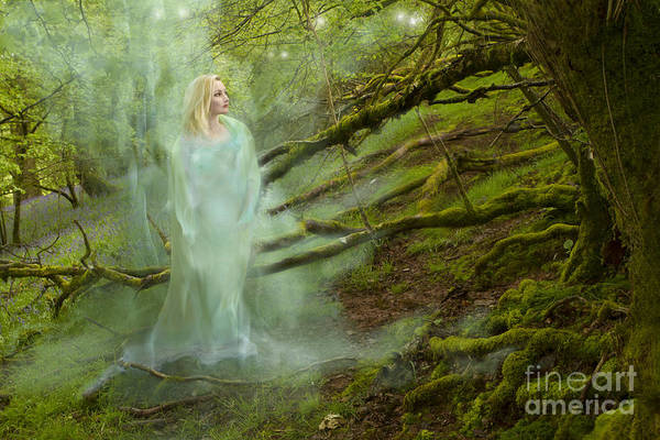 Wall Art - Photograph - A Ghost In The Forest by Angel Ciesniarska