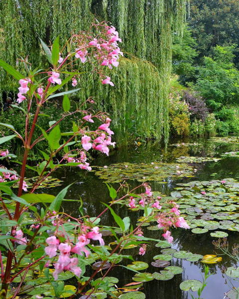 Claude Monet Photograph - A Glimpse Of Monet's Pond At Giverny by Carla Parris