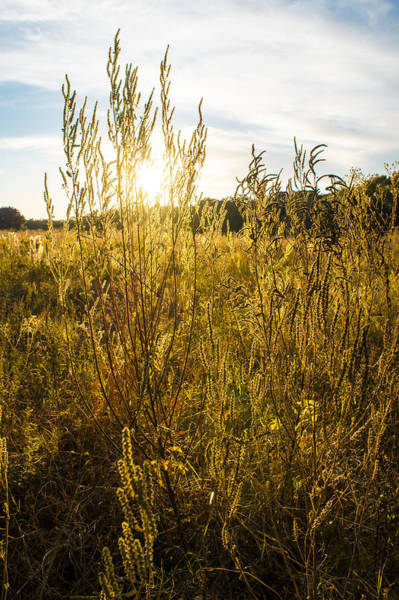 Brazos Bend State Park Wall Art - Photograph - A Golden Field by Ellie Teramoto