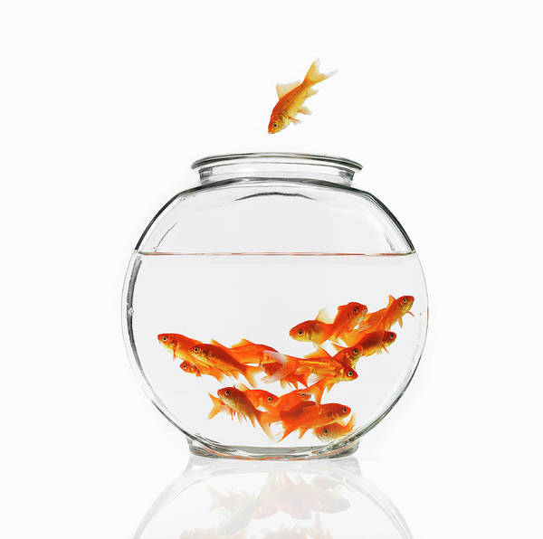 Pet Care Photograph - A Goldfish In The Air Diving Into A by Mint Images - David Arky