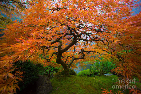 Wall Art - Photograph - A Great Big Hug From The Tree by Bridget Calip
