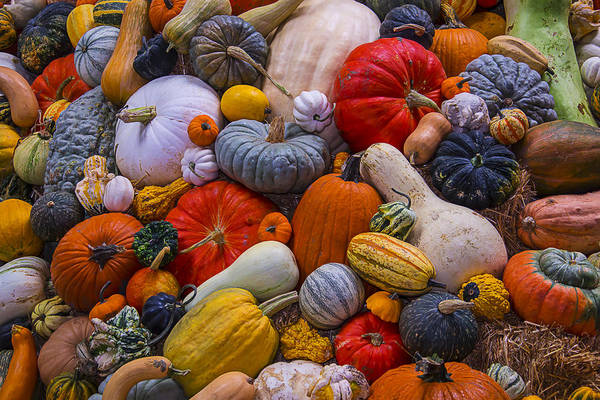 Gourd Photograph - A Great Harvest by Garry Gay
