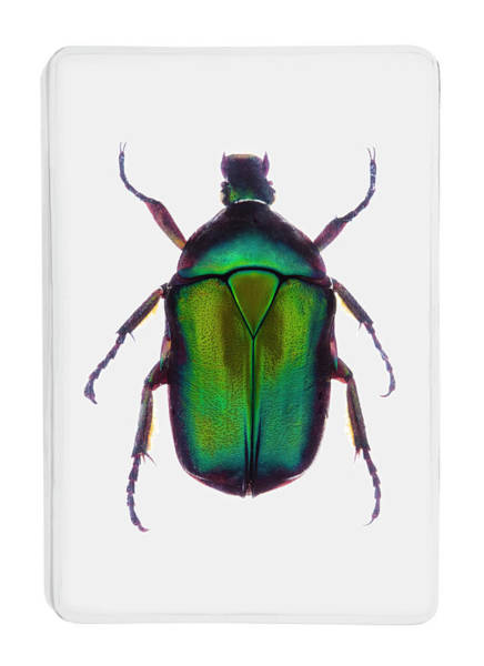 Trapped Photograph - A Green Metallic Beetle In Clear Resin by Richard Boll