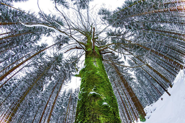 High Dynamic Range Imaging Photograph - A Greenday In The Woods by Alexander Matt Photography