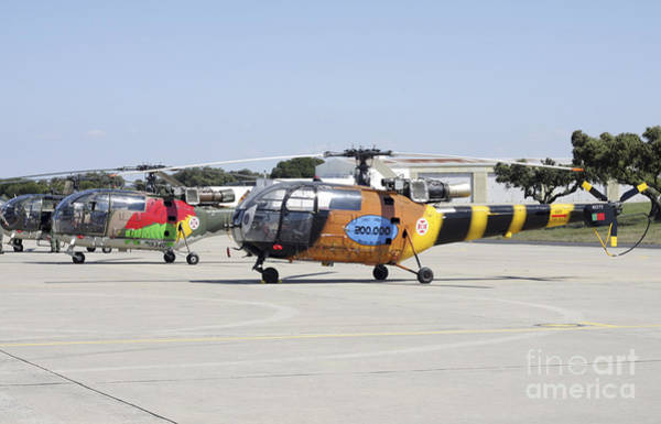 Alouette Wall Art - Photograph - A Group Of Alouette IIi Utility by Timm Ziegenthaler