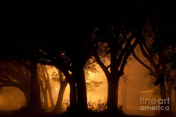 A Grove Of Trees Surrounded By Fog And Golden Light Art Print