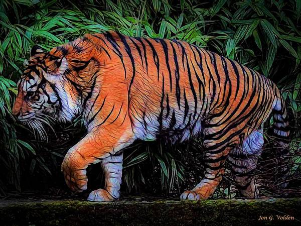 Painting - A Grumpy Tiger by Jon Volden