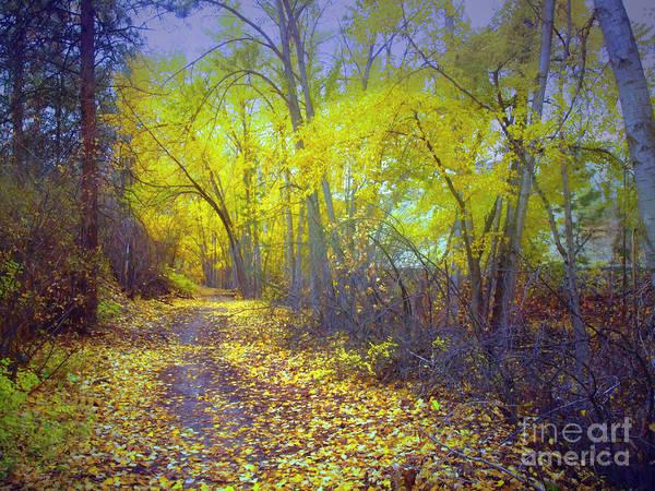 Photograph - A Haunted Autumn by Tara Turner