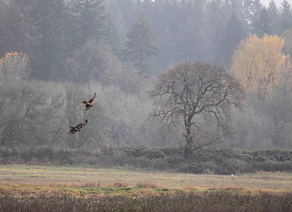 Vogel Photograph - A Hawk's Paradise by Angie Vogel