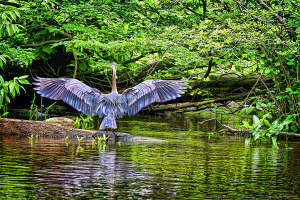 Photograph - A Heron Touches Down by Eleanor Abramson