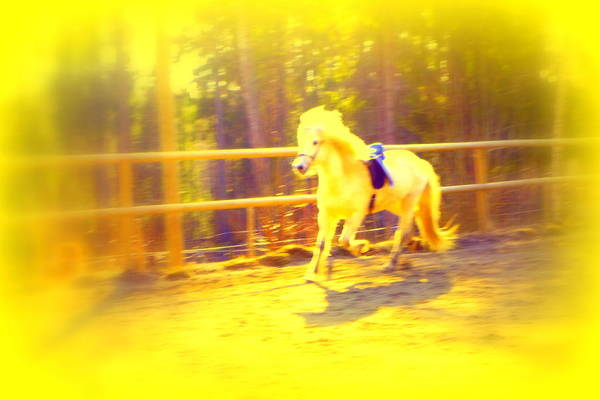 Capable Photograph - She Is A Horse For A Princess by Hilde Widerberg