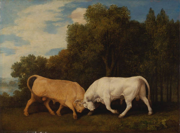 Painting - Bulls Fighting by Celestial Images