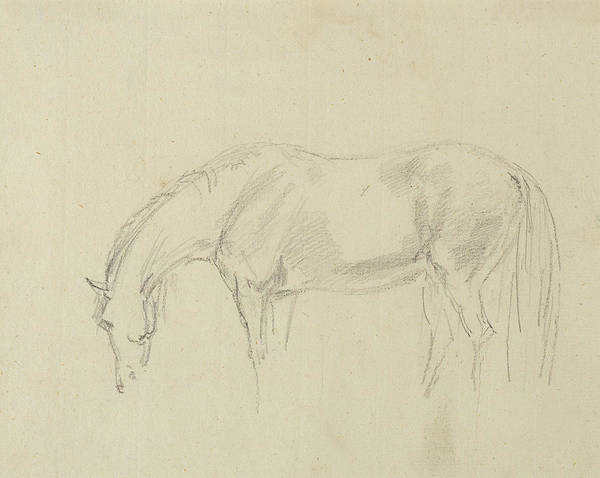 Wall Art - Drawing - A Horse Grazing  by Sawrey Gilpin
