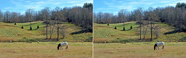 Photograph - A Horse Named Dipstick In Stereo by Duane McCullough