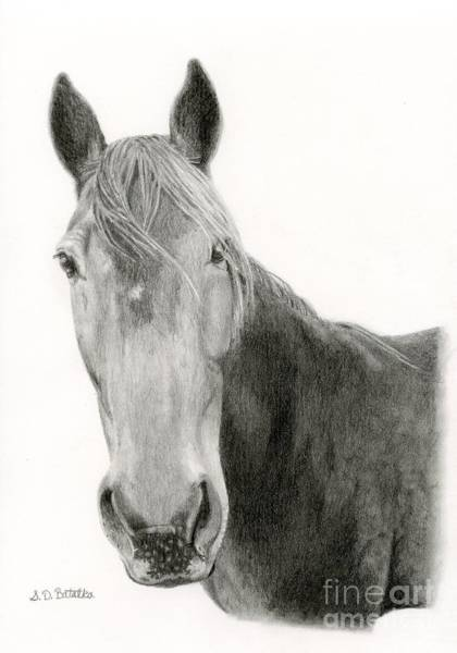 Equestrian Drawing - A Horse Of Course by Sarah Batalka