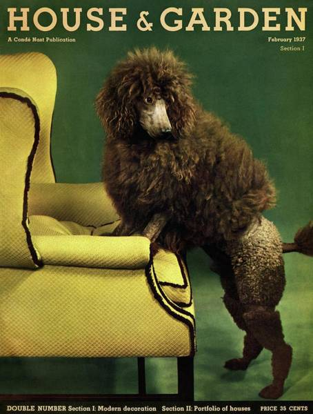Houses Photograph - A House And Garden Cover Of A Poodle by Anton Bruehl