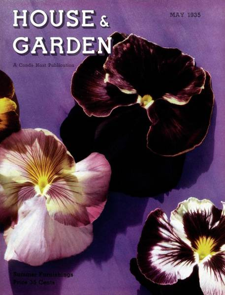 Purple Flower Photograph - A House And Garden Cover Of Pansies by Anton Bruehl