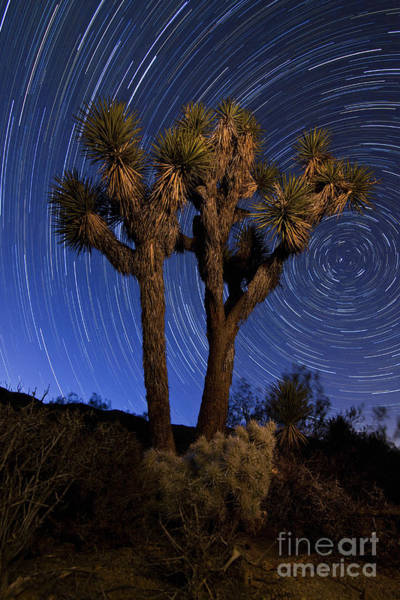 Yucca Palm Photograph - A Joshua Tree Against A Backdrop by Dan Barr