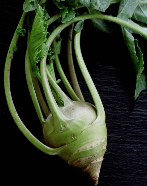 Green Photograph - A Kohlrabi by Romulo Yanes