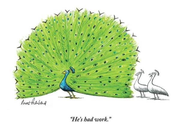 Work Out Drawing - A Large Peacock With Its Feathers Out Is Admired by Mort Gerberg
