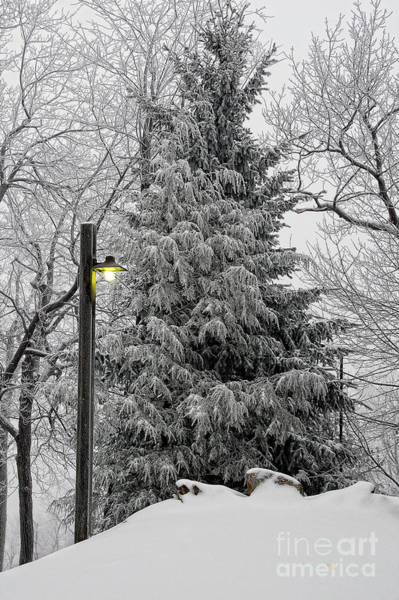 Photograph - A Light Snow by Lois Bryan