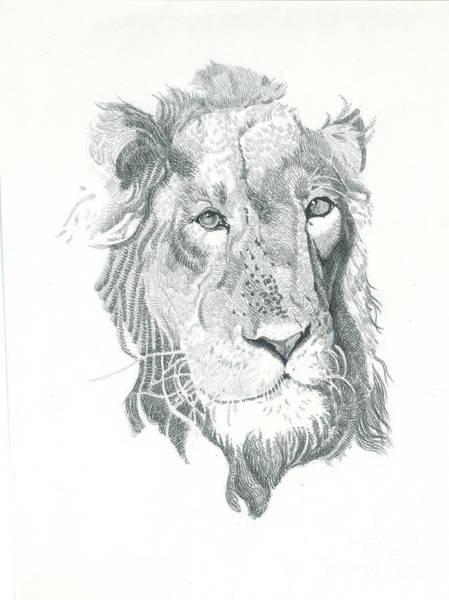 Restaurant Decor Drawing - A Lion Ace Drawing  by Makarand Joshi