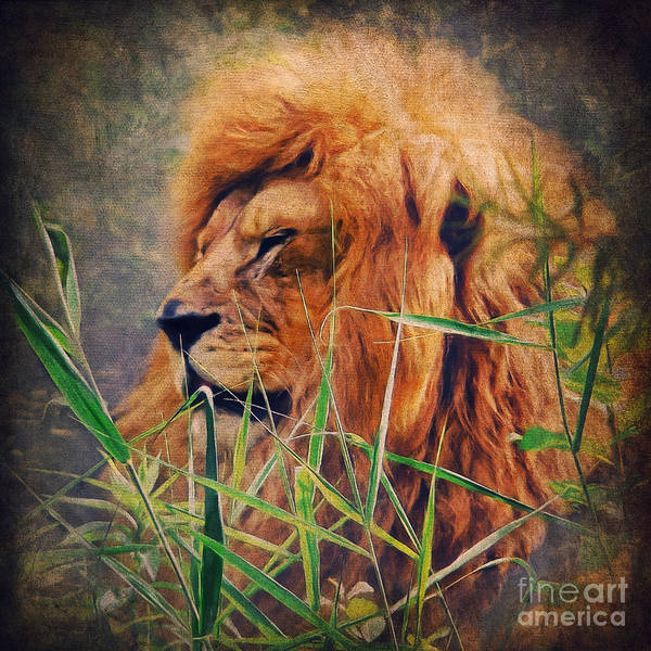 Digital Art - A Lion Portrait by Angela Doelling AD DESIGN Photo and PhotoArt