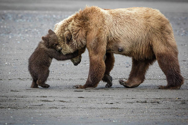 Passion Wall Art - Photograph - A Little Bear Hug by Renee Doyle