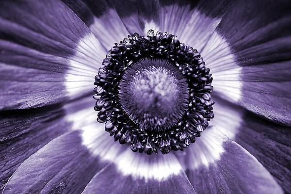 Photograph - A Little Bit Of Purple by Beth Akerman