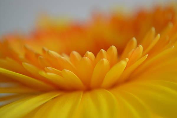 Photograph - A Little Kindness by Melanie Moraga